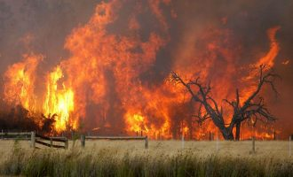 Fund Raising events for Bush Fire Relief