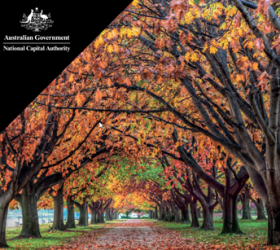 Draft Tree Management Policy – National Triangle