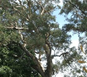 Territory Trees