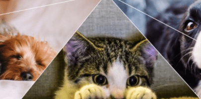 ACT Cat Plan 2021-31